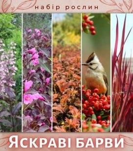 Набір рослин 'Яскраві барви'