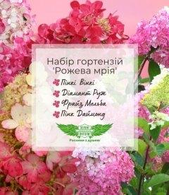 Набір гортензій 'Рожева мрія'