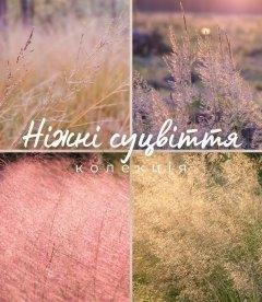 Набір декоративних трав 'Ніжні суцвіття'