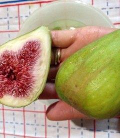 Ficus carica Смоковница (Инжир)