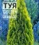 Thuja occidentalis 'Golden Smaragd', Туя западная 'Голден Смарагд'