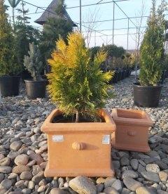 Горшок для растений 'Terracota'. Квадратный