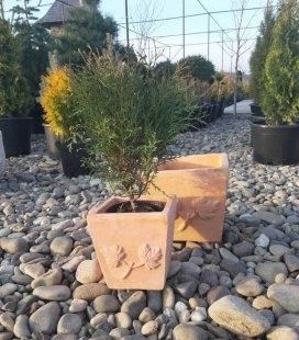 Горщик для рослин 'Terracota'. Куб Объём 9,3