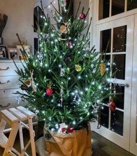 Picea abies, Ель обыкновенная