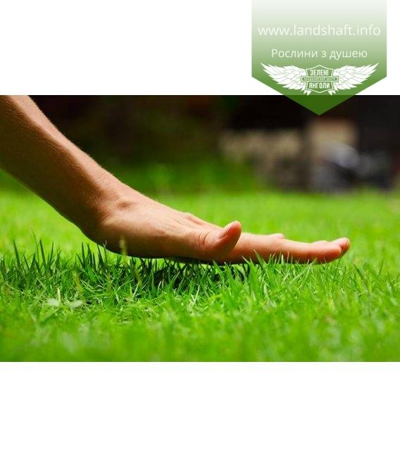Трава газонная DLF TRIFOLIUM 'ROBUSTICA' (СЕМЕНА)