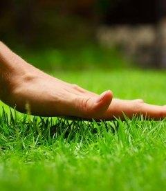Трава газонна Універсальна (НАСІННЯ)