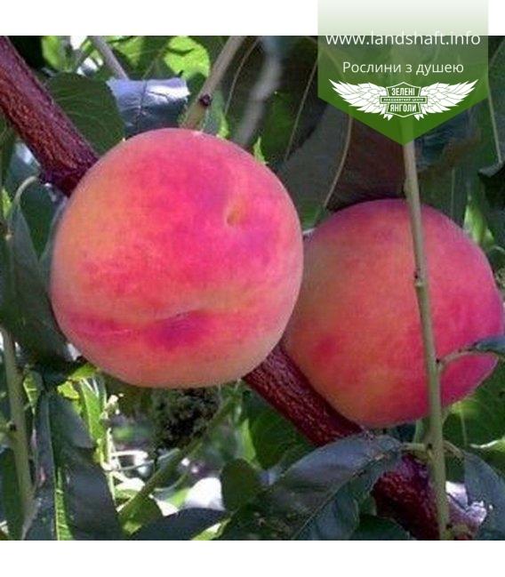 Prunus persica 'Flamingo', Персик 'Фламінго'
