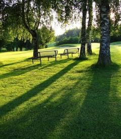 Трава газонна Паркова (НАСІННЯ)