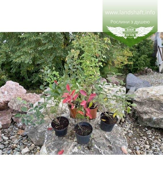 Набор растений