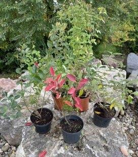 Набір рослин 'Корисний'