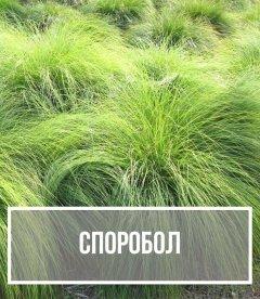 Споробол (Sporobolus)