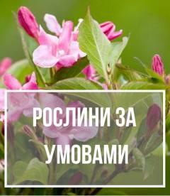 Рослини за умовами
