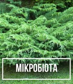 Мікробіота (Microbiota)