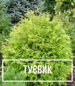 Туевик (Thujopsis)