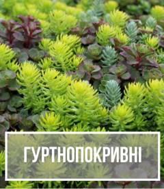 Грунтопокривні рослини