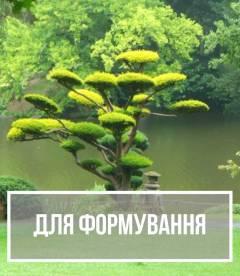 Рослини для формування