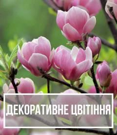 Рослини з декоративним цвітінням