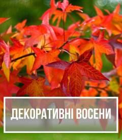 Рослини, декоративні восени