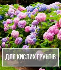 Рослини для кислих грунтів