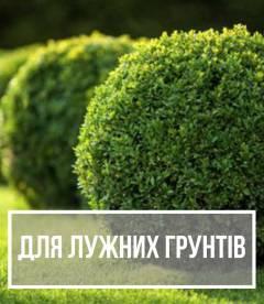 Рослини для лужних грунтів