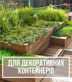 Рослини для декоративних контейнерів