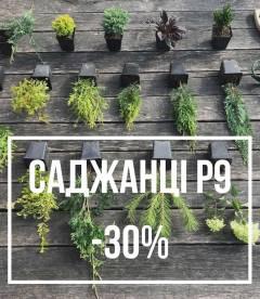 Рослини в P9 - 30%
