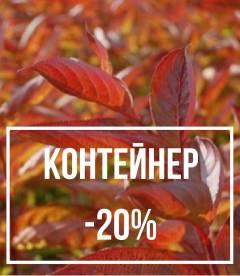 Рослини в контейнері до -20%