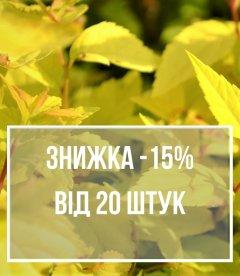 Скидка 15% от 20 шт