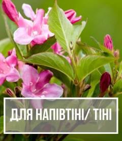 Рослини для напівтіні та тіні