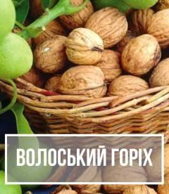 Волоський (грецький) горіх