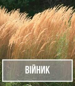 Вейник (Calamagrostis)