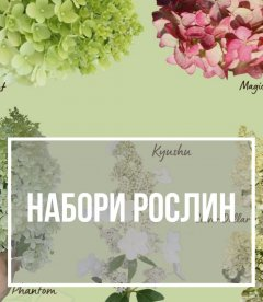 Набори рослин зі знижкою до -30%
