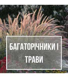 Многолетние, травы