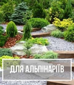 Рослини для альпінаріїв