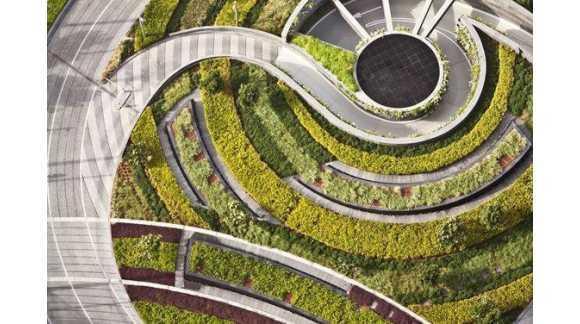 """Рослини для благоустрою, озеленення вулиць, дворів, скверів від розсадника """"Зелені Янголи"""""""