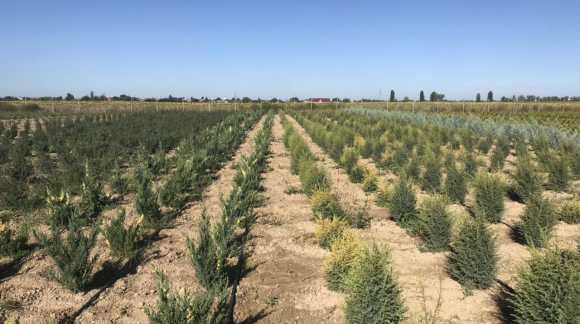 Сезон выкопки растений с грунта 2019