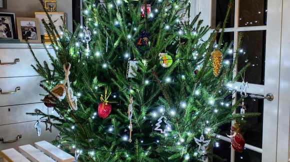 Жива новорічна ялинка в горщику: як правильно вибрати, доглядати та посадити .