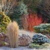 8 складових казкового зимового саду