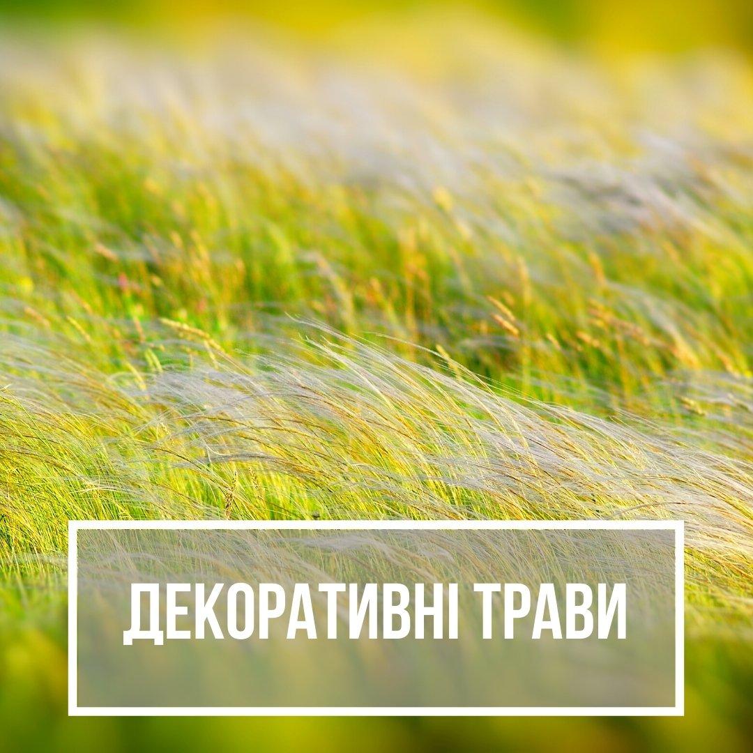 Декоративні трави