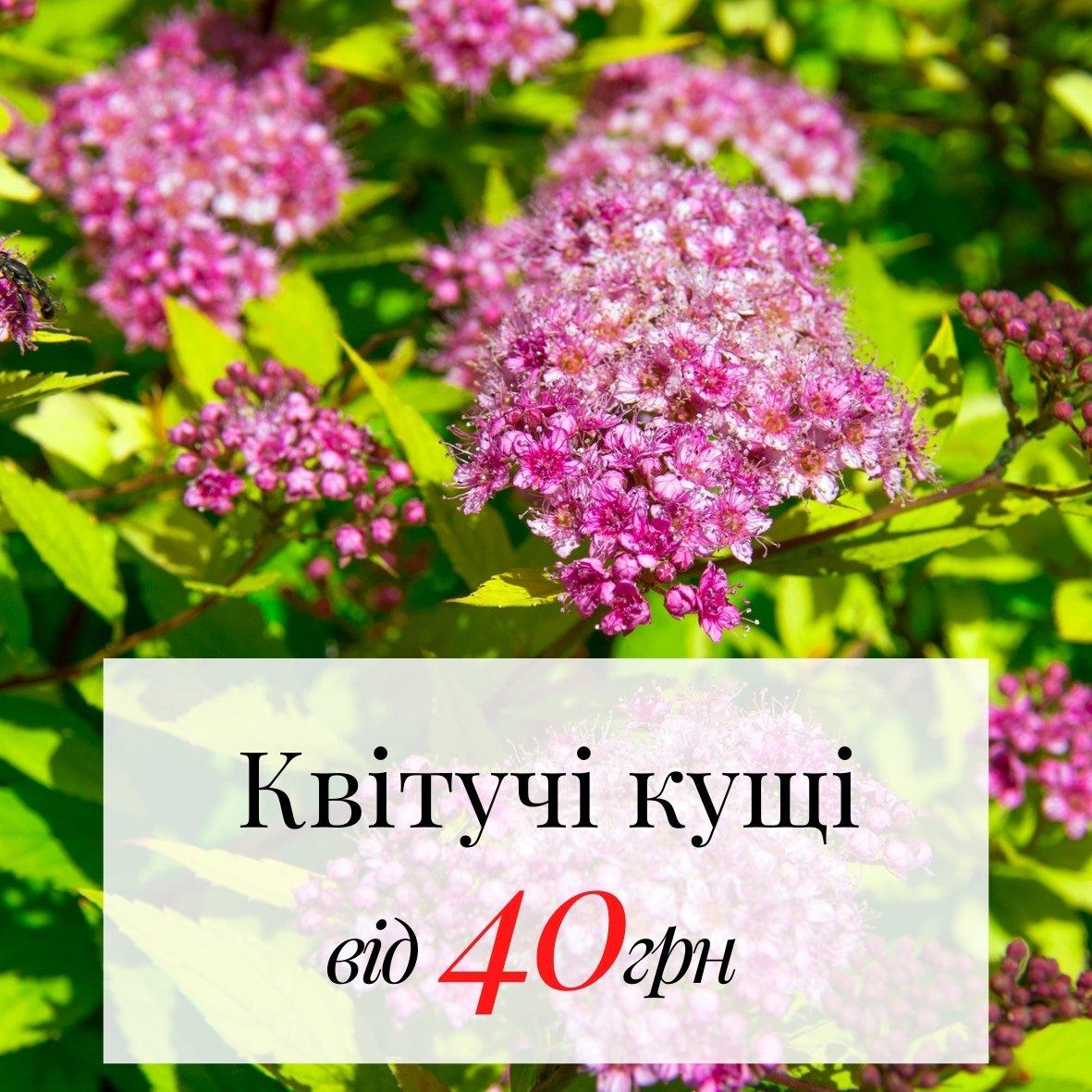 Цветущие кустарники от 40грн